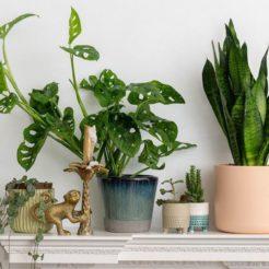 Purifiez votre intérieur grâce aux plantes